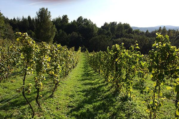 2017-spa--wine-vacation-in-southern-poland--krakow_24071452038_o
